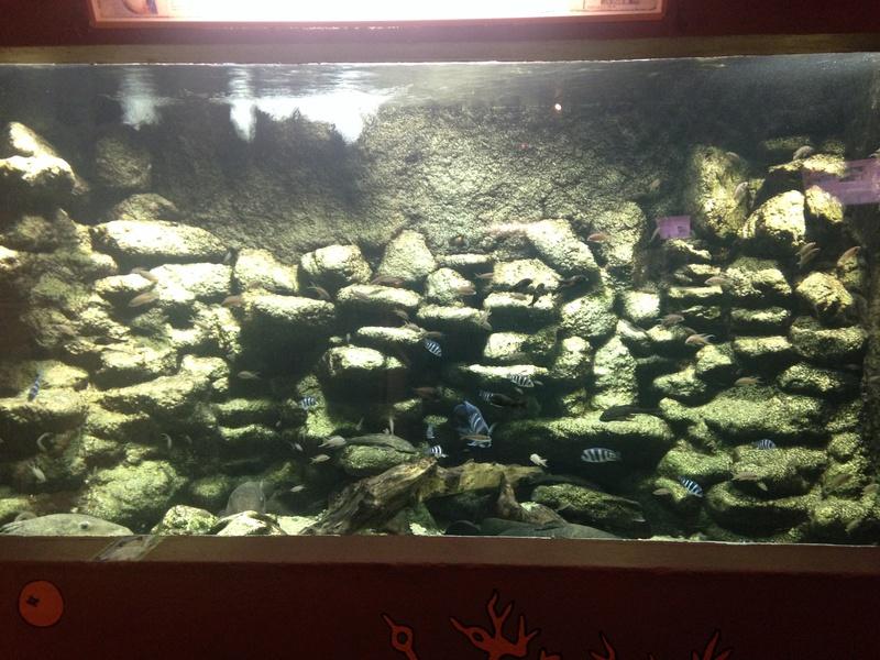 Visite Aquarium des Tropiques Allex dans la Drome B10