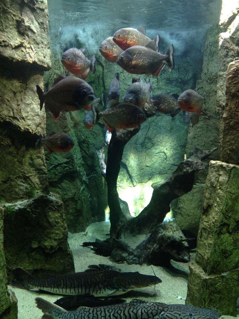 Visite Aquarium des Tropiques Allex dans la Drome C10