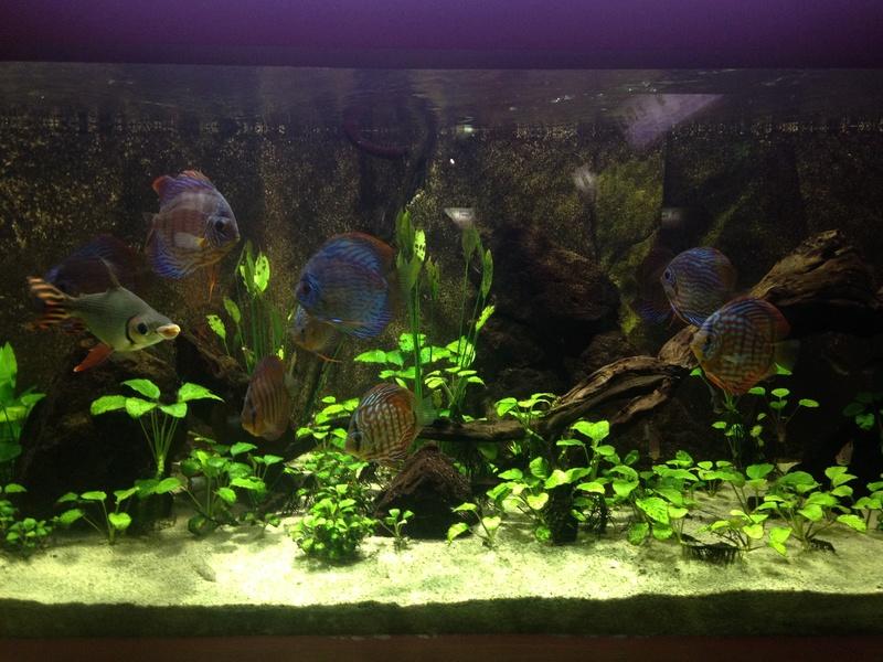 Visite Aquarium des Tropiques Allex dans la Drome D10