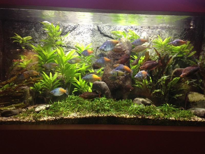 Visite Aquarium des Tropiques Allex dans la Drome E10