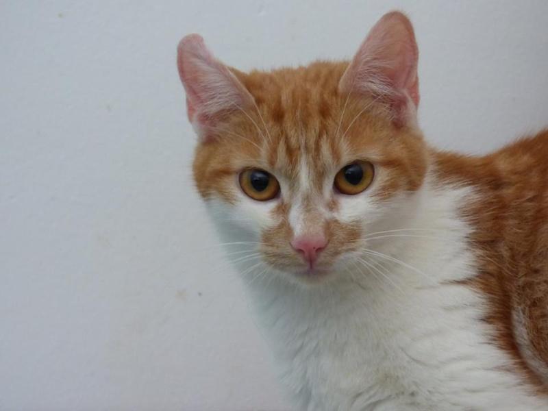 PITCH, chat, jeune femelle - Pascani- En FA chez Florin - adoptée en Roumanie 13495210