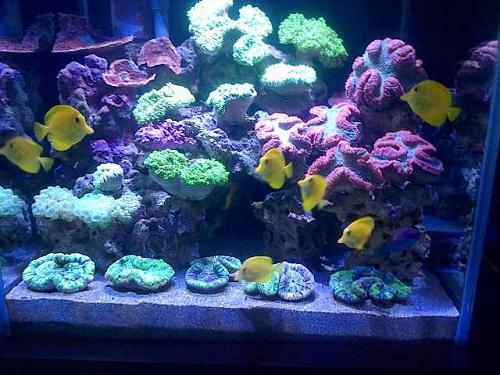 500+ Coral Pilihan Makassar in Stock Now Img_2012
