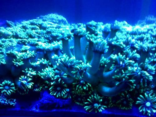 500+ Coral Pilihan Makassar in Stock Now Img_2015