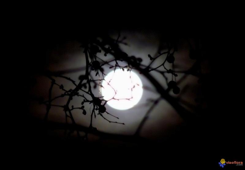 Au clair de Lune - Page 2 Clair-11