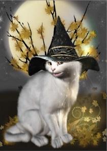 Chats Enchantés Kitty_10