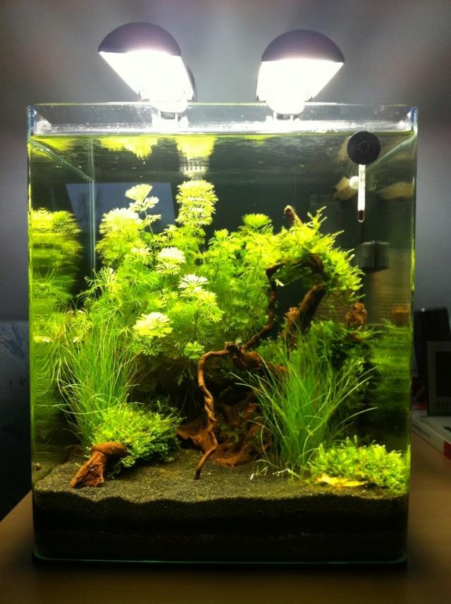 LANCEMENT | Mon premier aquarium Nano10