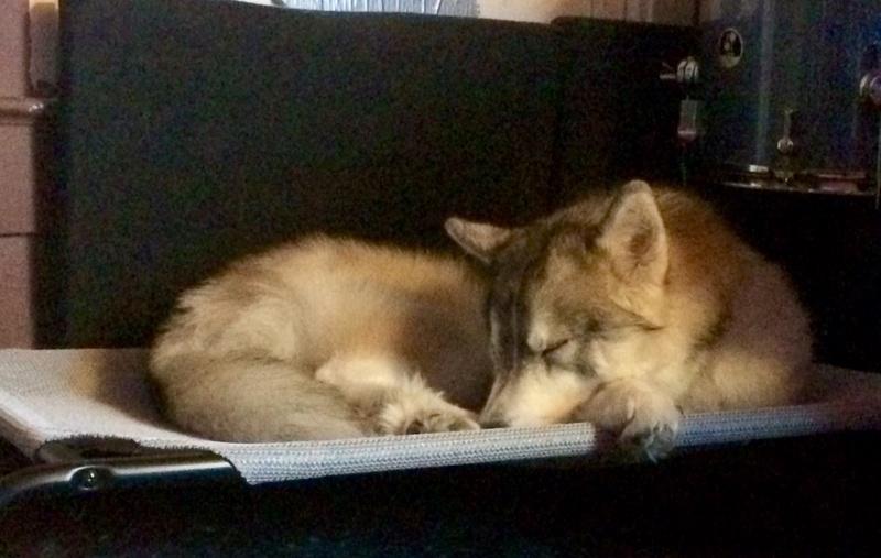 Cooling dog bed? (advice request) Fullsi10