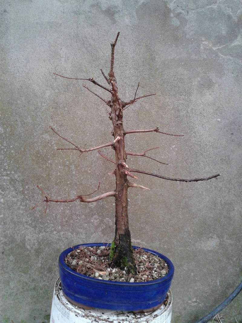 WIP Metasequoia 13_811