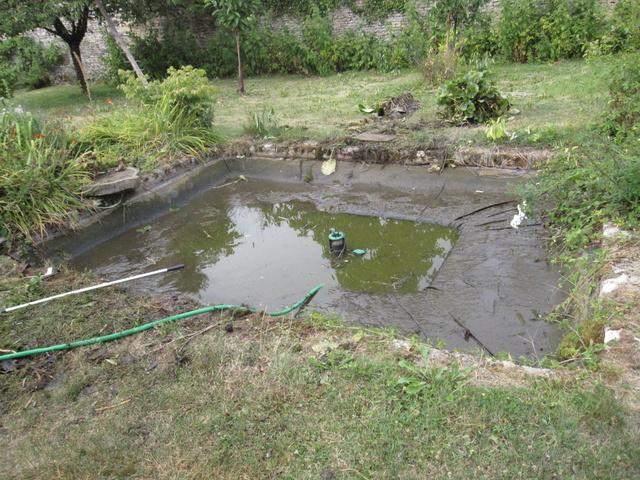 Rénovation/construction d'un bassin Img_1311