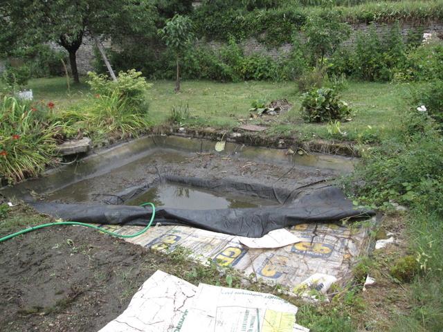 Rénovation/construction d'un bassin Img_1314