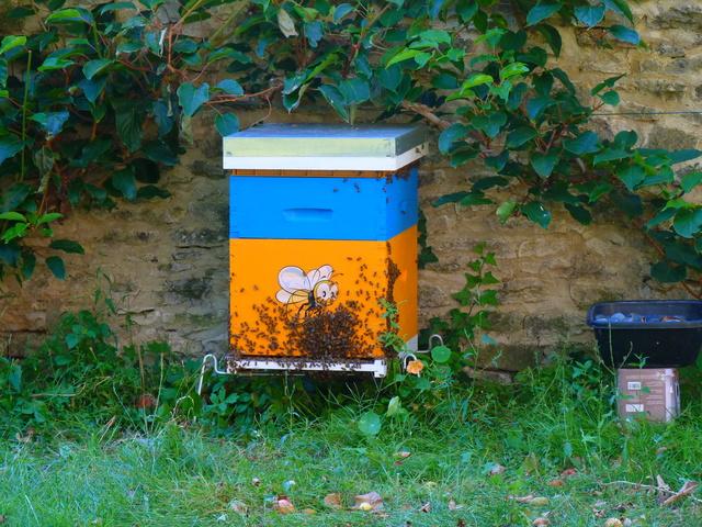 Abeilles, ruches et jardins P1040711