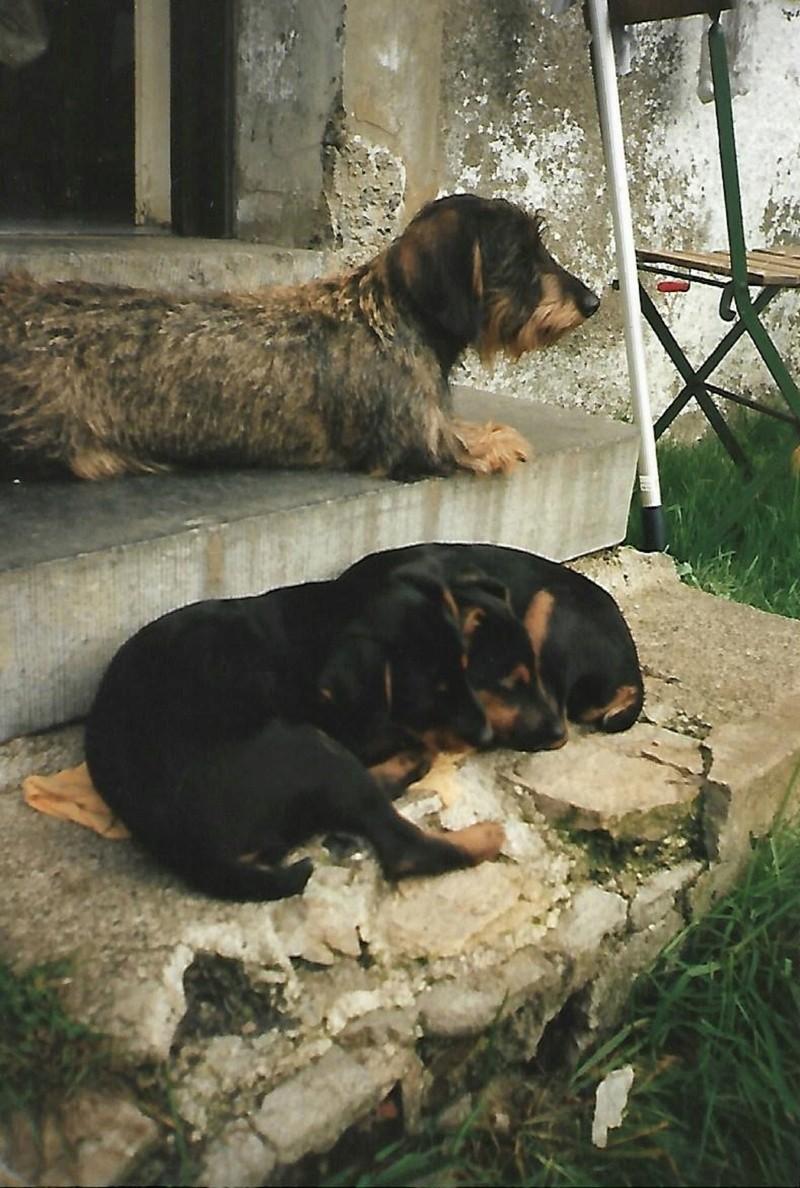 choix d un chien a sanglier Scan0017