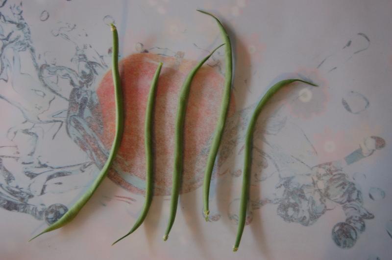 Les graines germées pour les nuls - Page 3 Harico10