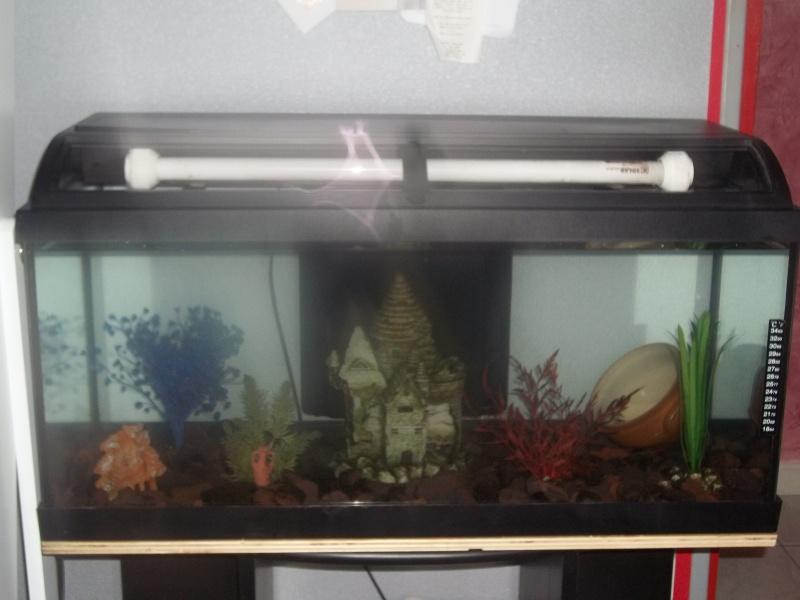 [résolu]aquarium 45 litres - Page 2 100_3710