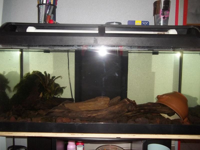 Comment positionner mes décos d'aquarium? 100_3812