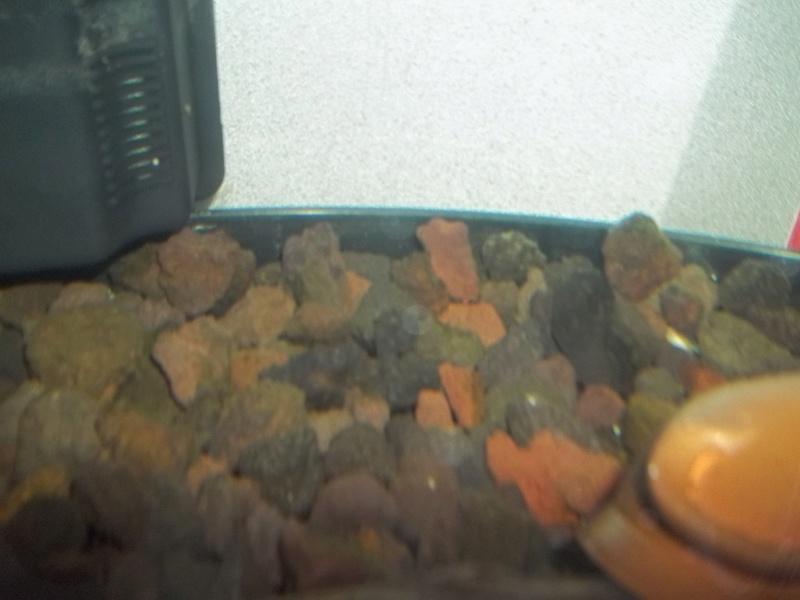 Comment positionner mes décos d'aquarium? 100_3813