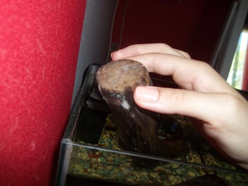 Comment positionner mes décos d'aquarium? 100_3821