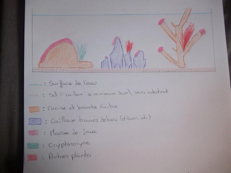Comment positionner mes décos d'aquarium? 100_3822