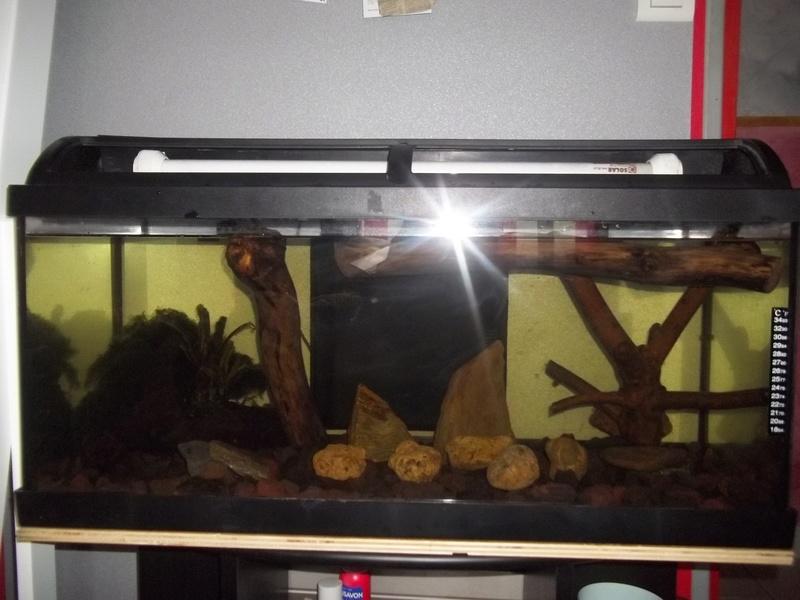 Comment positionner mes décos d'aquarium? 100_3827