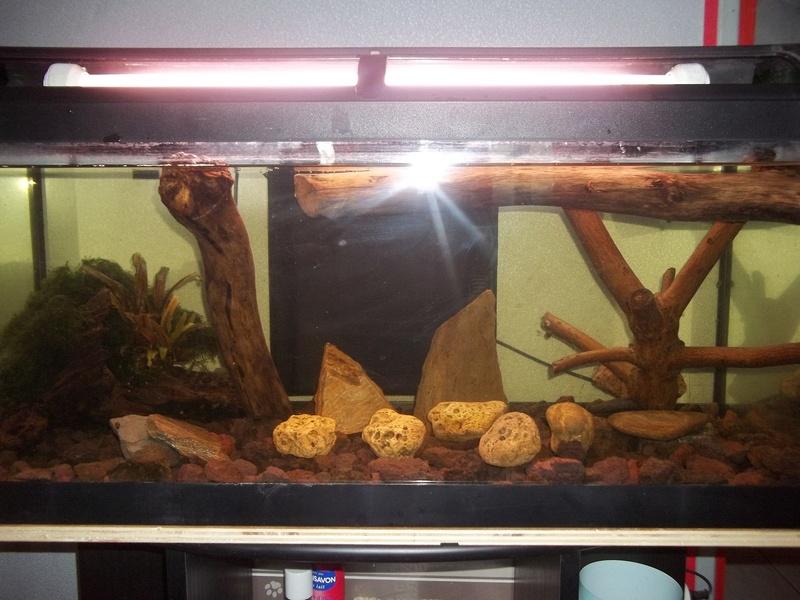Comment positionner mes décos d'aquarium? 100_3828