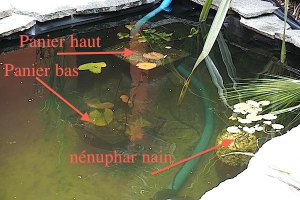Bassin extérieur avec voiles de chine - Page 5 A10