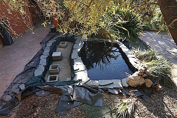 Bassin extérieur avec voiles de chine - Page 4 Dsc00021