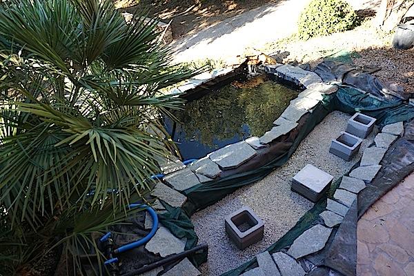 Bassin extérieur avec voiles de chine - Page 4 Dsc00022