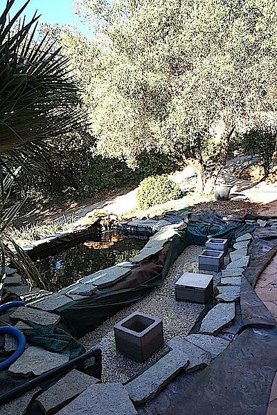 Bassin extérieur avec voiles de chine - Page 4 Dsc00112