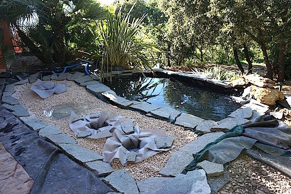 Bassin extérieur avec voiles de chine - Page 4 Dsc00118