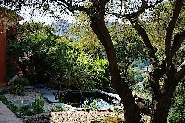 Bassin extérieur avec voiles de chine - Page 4 Dsc08214