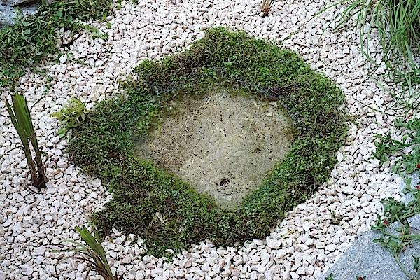 Bassin extérieur avec voiles de chine - Page 5 Dsc08532