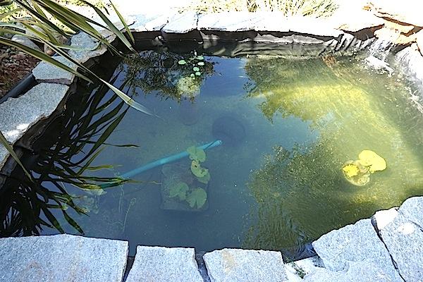 Bassin extérieur avec voiles de chine - Page 5 Dsc08533