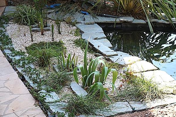Bassin extérieur avec voiles de chine - Page 5 Dsc08535
