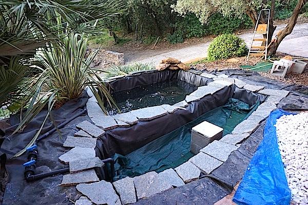 Bassin extérieur avec voiles de chine - Page 4 Dsc09911