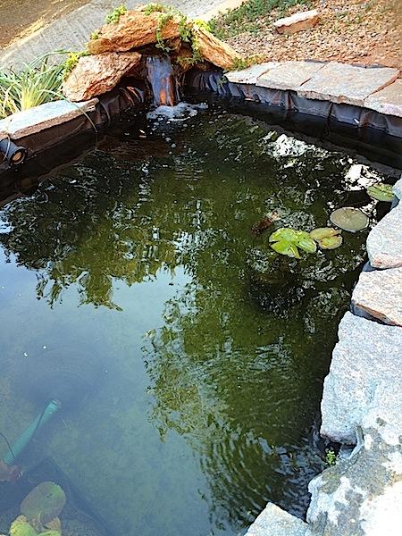Bassin extérieur avec voiles de chine - Page 5 Img_2011