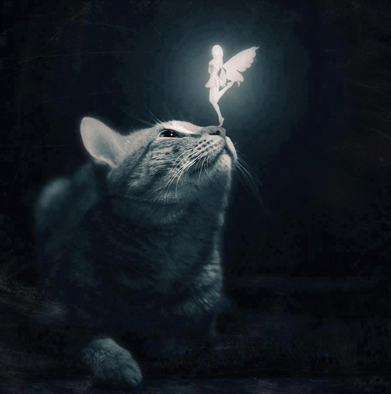 Chats Enchantés Catsme10