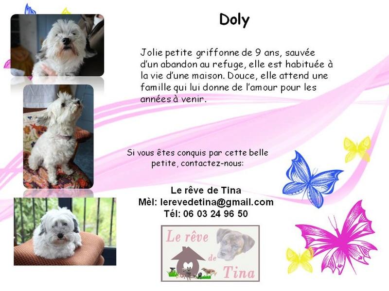 DOLY, jolie petite griffone de 9 ans, a tout perdu en perdant sa mamie (61) Doly12