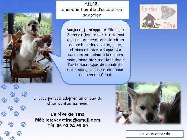 FILOU, un amour de ratier de 3 ans 1/2 trèèès câlin Filou11