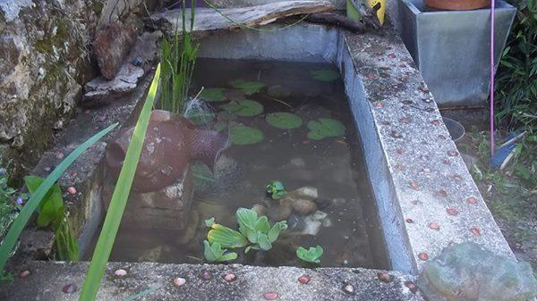 votre aquarium ou votre bassin - Page 3 Bassin10