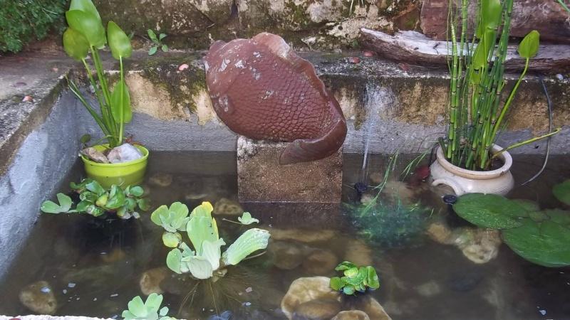 votre aquarium ou votre bassin - Page 3 Bassin11