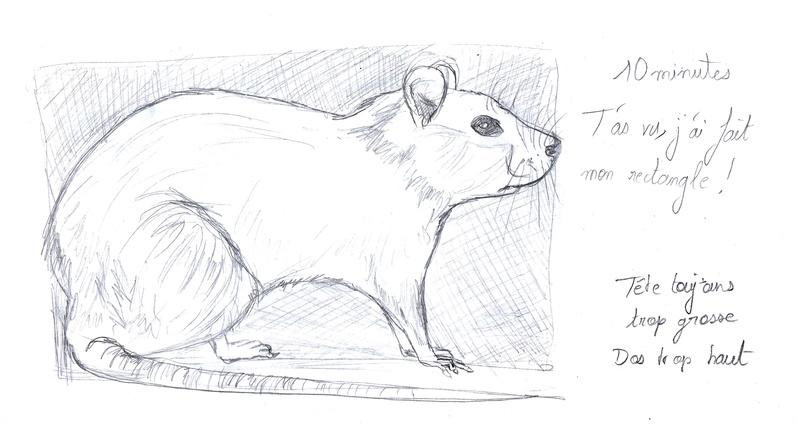 Les croquis de Sambre Rat10m10