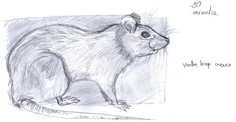 Les croquis de Sambre Rat20m10