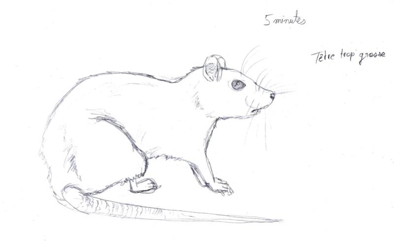 Les croquis de Sambre Rat5mi10