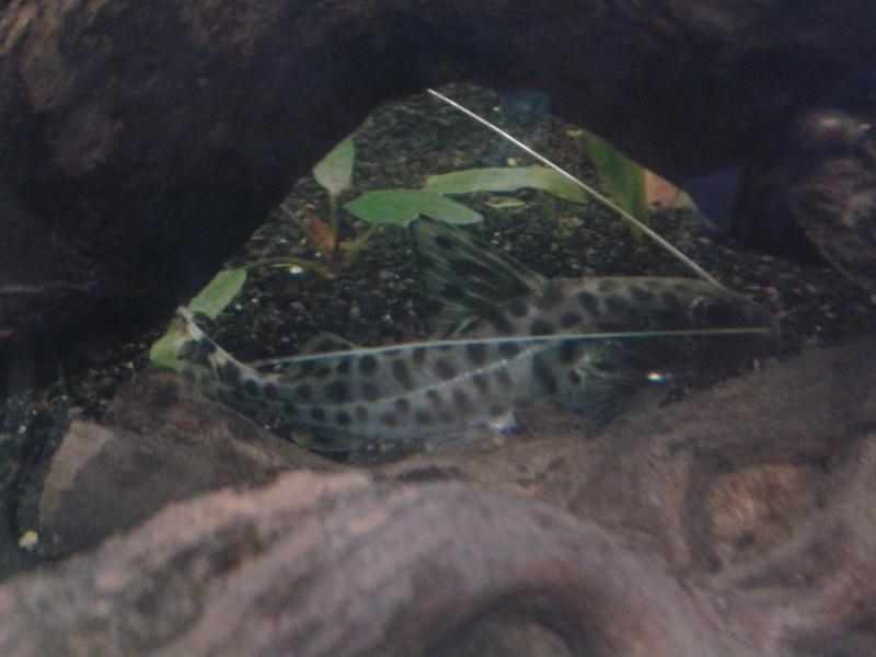 Mes bacs et mes poissons chats 20160813