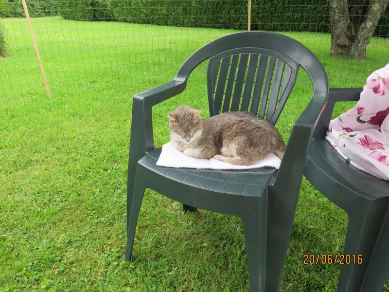 Gentil chat cherche panier retraite pour finir sa petite vie /15 - Page 4 Img_we12