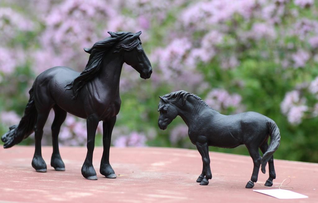 my Deborah McDermott's horses Collec10