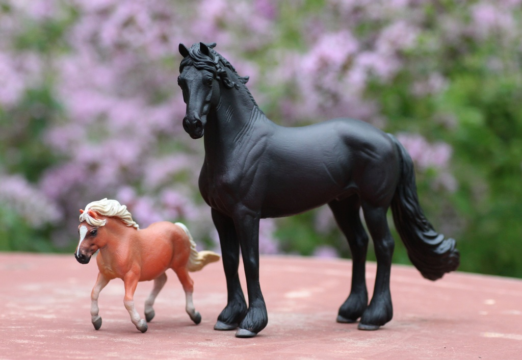 my Deborah McDermott's horses Collec13