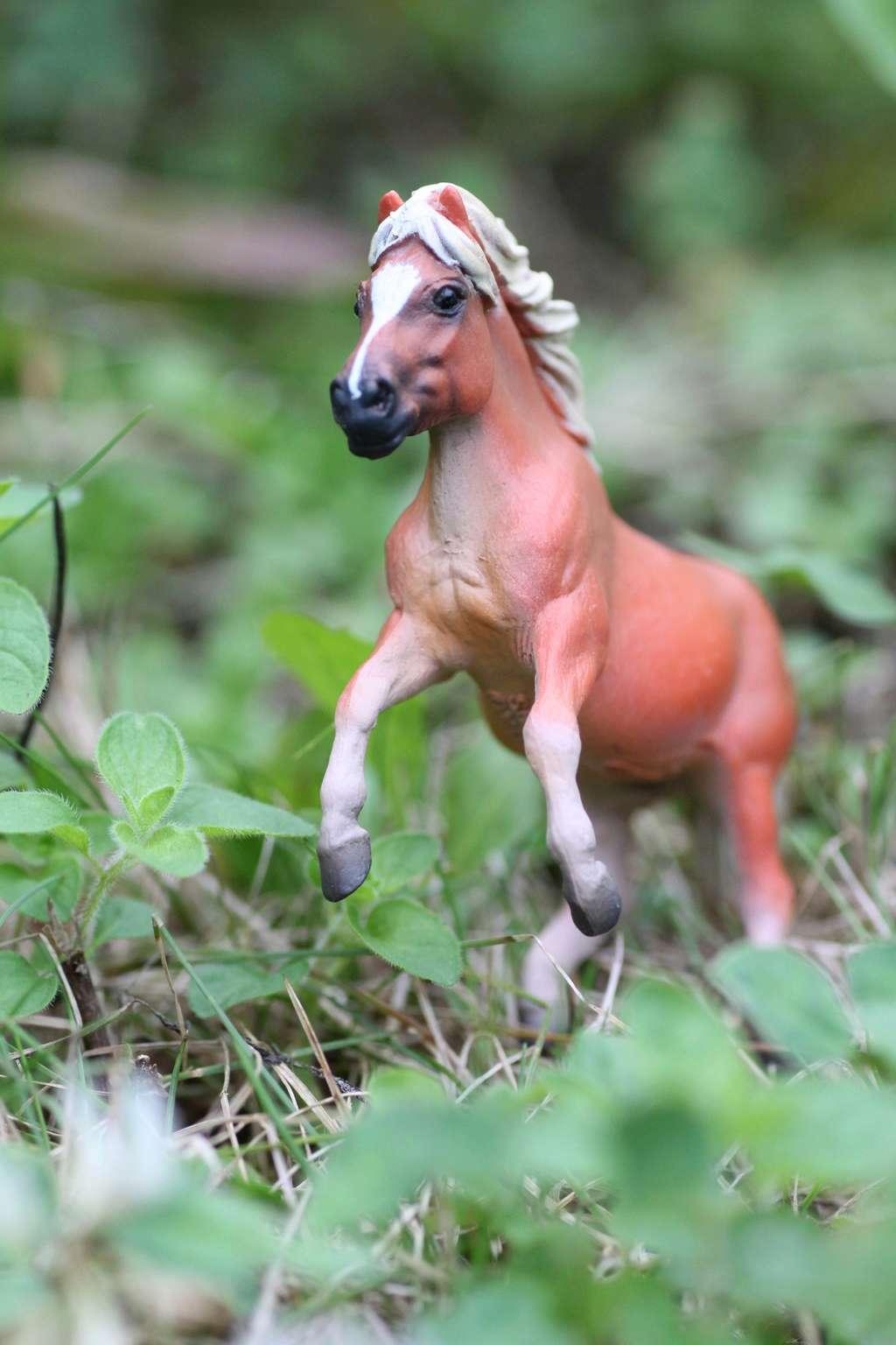 my Deborah McDermott's horses Rearin10