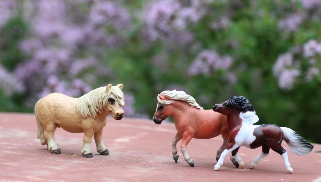 my Deborah McDermott's horses Shetla10