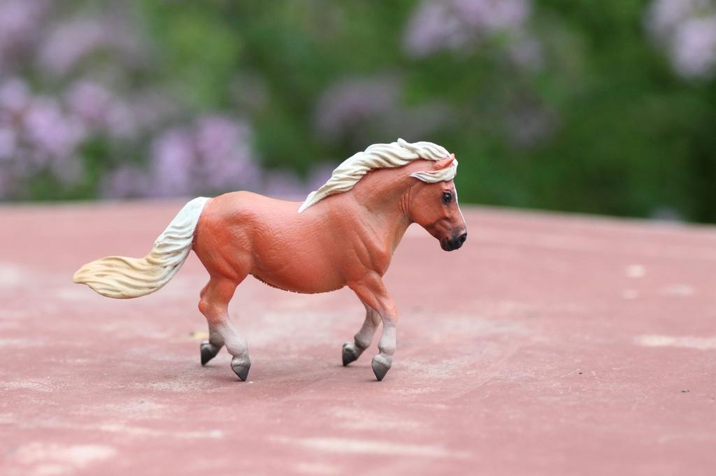 my Deborah McDermott's horses Shetty10